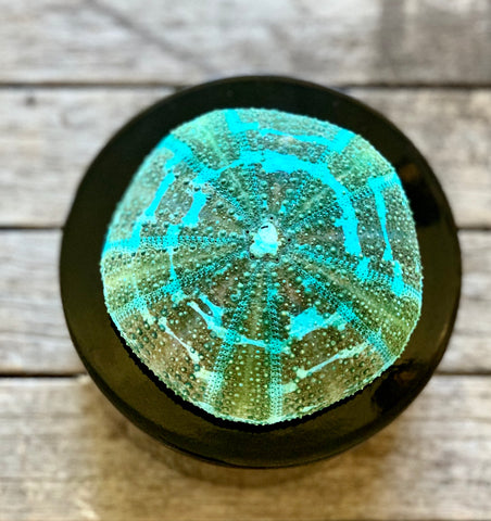 Round Black Lacquer Box with A Turquoise Urchin