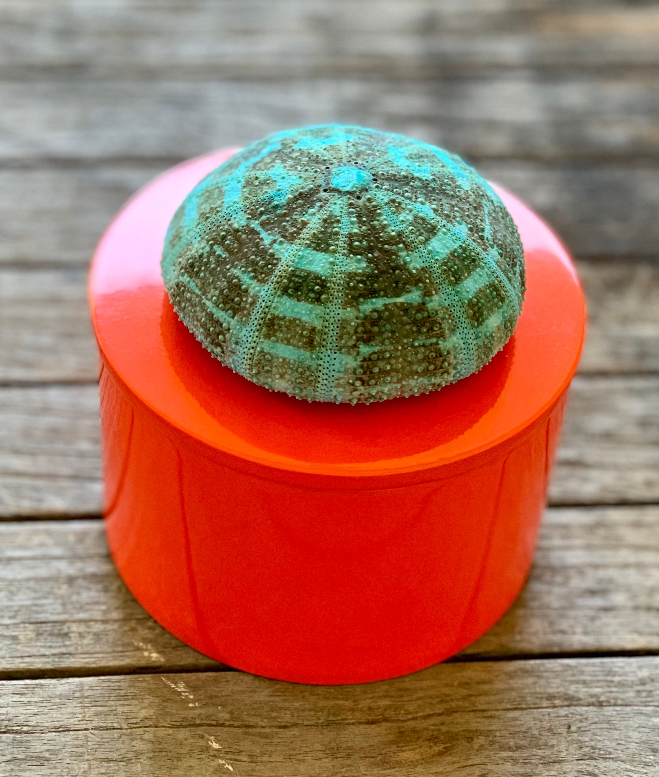 Round Orange Lacquer Box with Turquoise Urchin