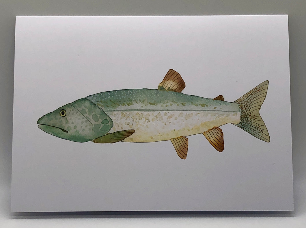 Greeting Card - Fish