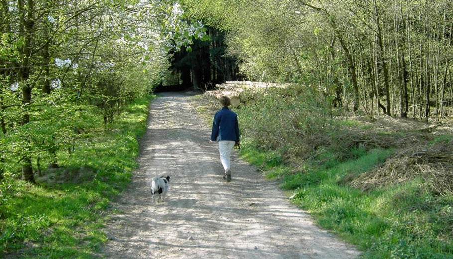 Why Spring is the Best Time to Take Up Walking Outdoors