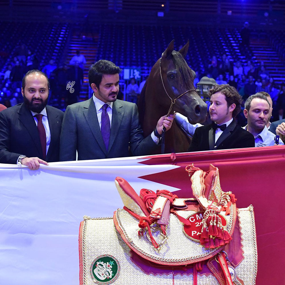 ARABIAN HORSE WORLD CHAMPIONSHIP 2017