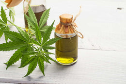 How is CBD Oil Made? The Basics of CBD Extraction