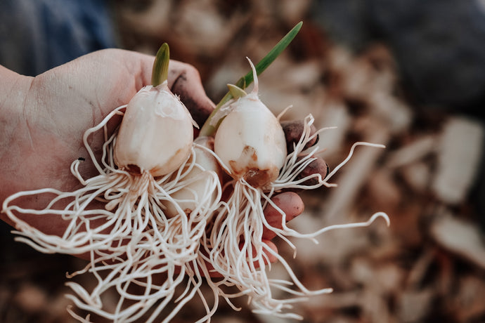 Our Living Homeschool with Garlic