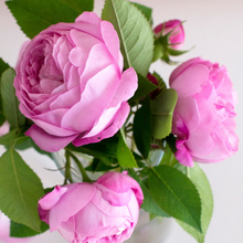 Load image into Gallery viewer, Pink Picasso Beautiful Blooms