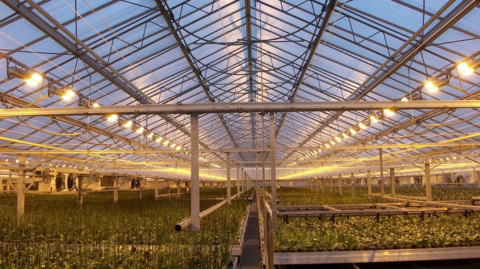 LED LIGHTING TECHNOLOGY IN PLANT GROWTH