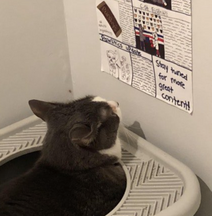 Reasons For Cats Only Pooping Outsode The Litter Box
