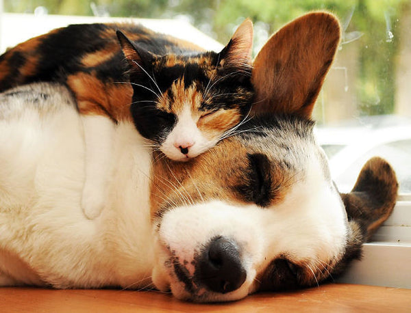 cats and dogs love