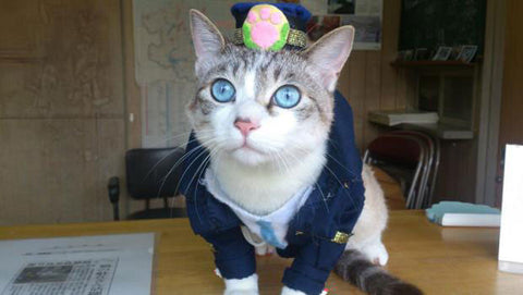 officer lemon kyoto cats japan cats police cat cute cat