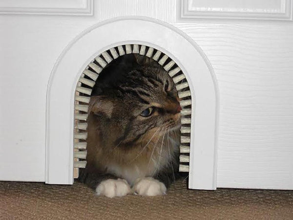 how to keep cat from using dog door