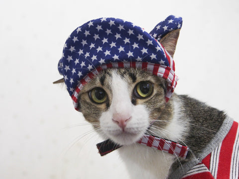 meowingtons july 4th