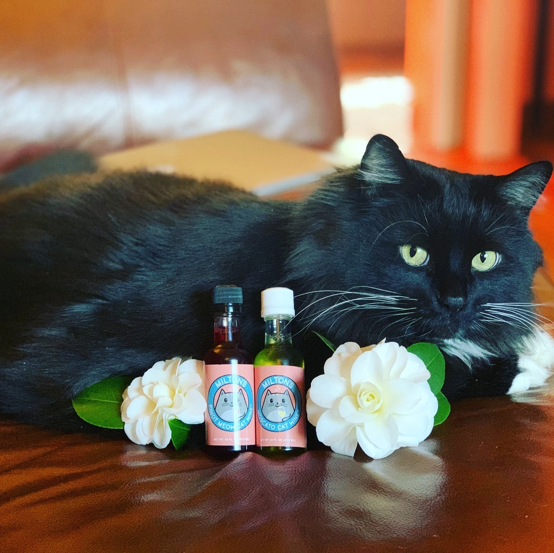 1bf3763a Mothers Day Gift Ideas For Cat Lovers Meowingtons
