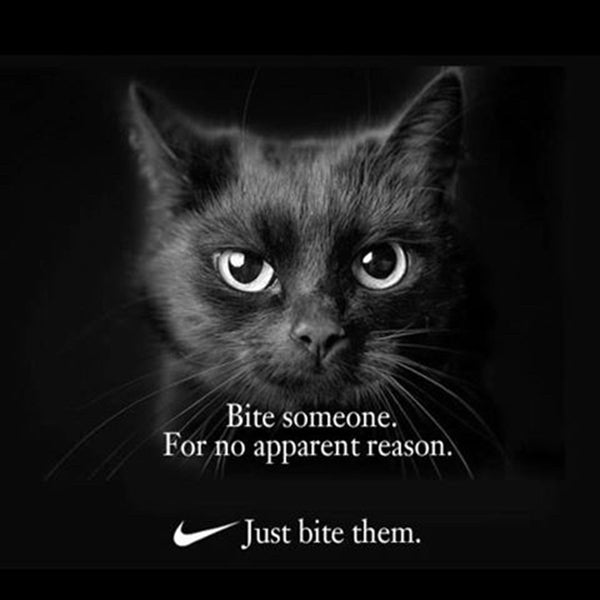 Nike 'Just Do It' Cat Memes That Will Make Your Caturday ...