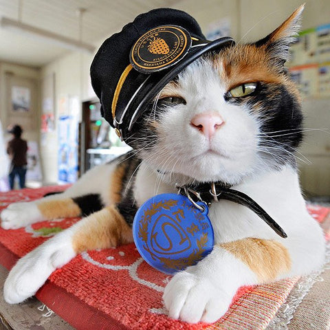 stationmaster tama tama the cat famous internet cats cat meme