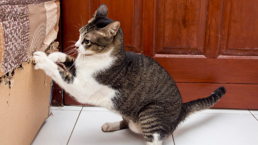 Why Cats Scratch Furniture And How To Get Them To Stop Meowingtons