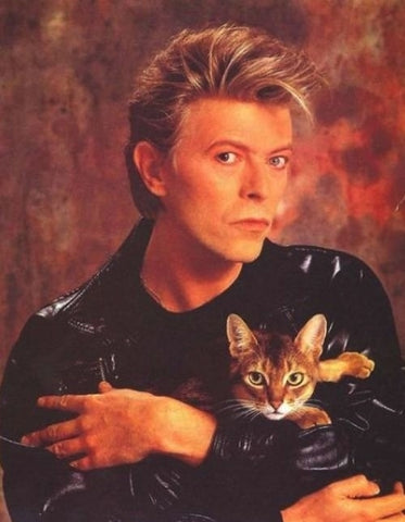 David Bowie cat meowingtons