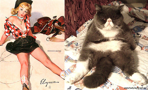 Cats That Think They Are Pinup Girls Meowingtons