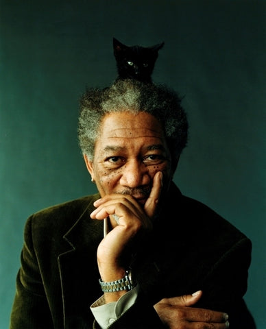 Morgan Freeman cat meowingtons