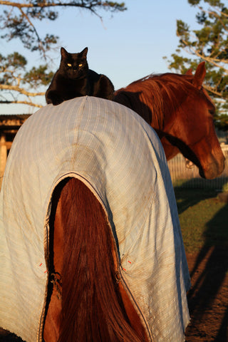 morris and champy morris the horse riding cat unlikely animal friends