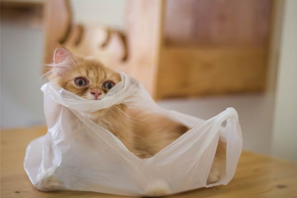 Cat inside plastic bag