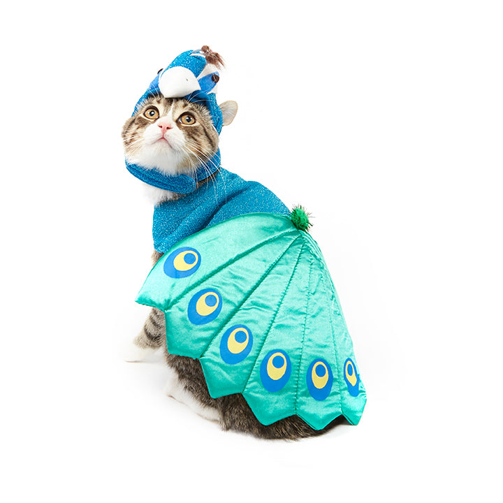 Halloween Peacock cAt Costume