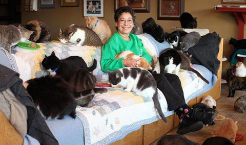 meowingtons crazy cat lady