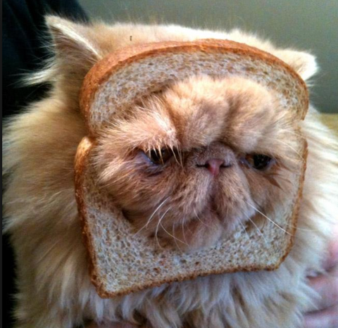 meowingtons bread cat