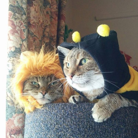 meowingtons cat costume Halloween & Halloween Cat Costumes That Everyone is Raving About. u2013 Meowingtons