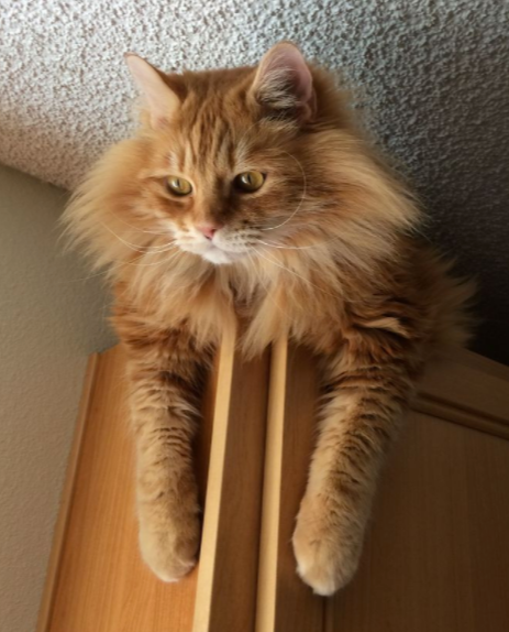 6 Things You Didn't Know About Orange Tabby Cats – Meowingtons
