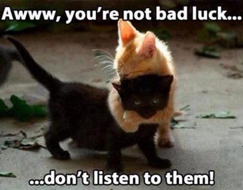 why are black cats bad luck? Meowingtons black cat facts