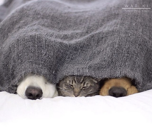 cats and dogs cuddling watki instagram