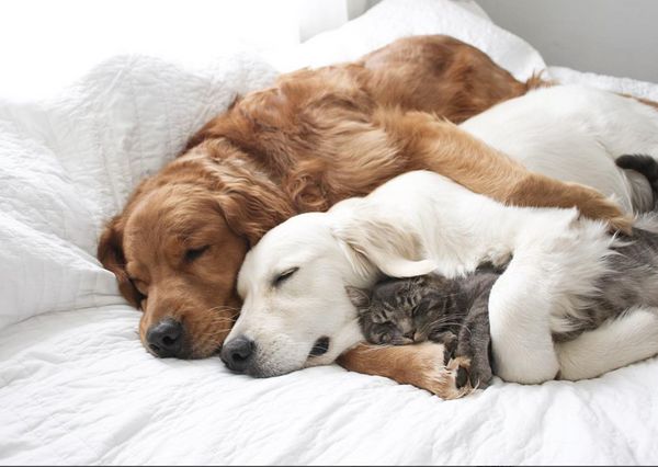 cats and dogs sleeping together cats of instagram