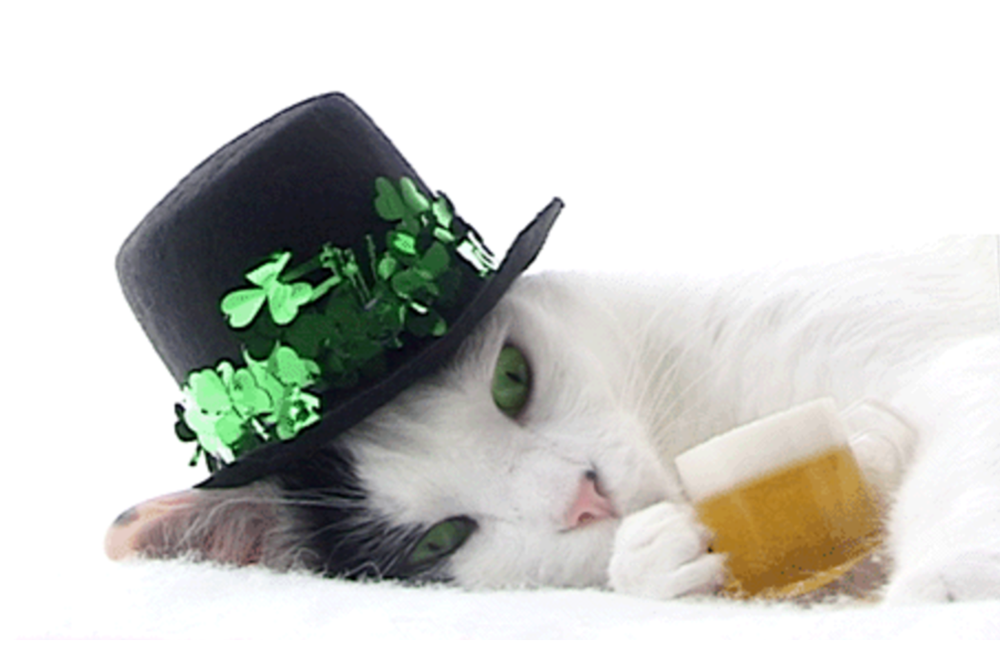 st paddys day cats green cats