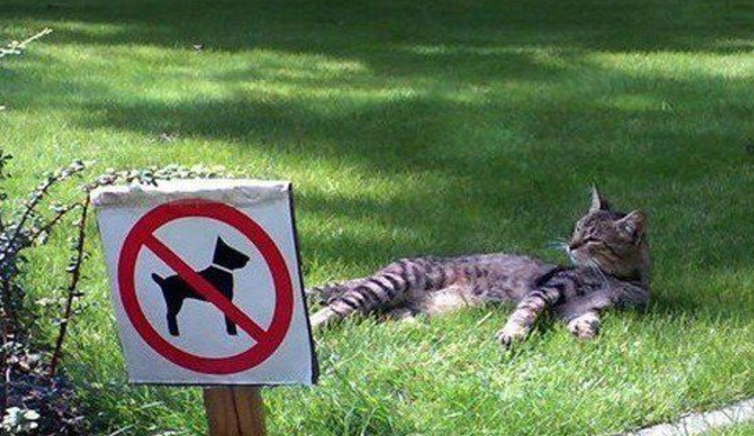 no dogs allowed cats only