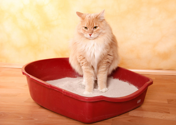 5 Signs Your Cat is Stressed Out – Meowingtons