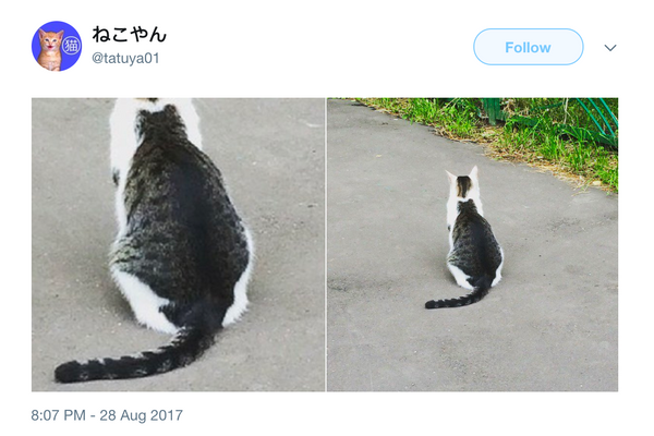 Cat-ception: Cats Within Cats That Will Make You Look Twice