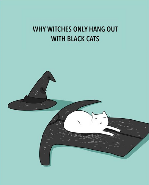 8 Spooky Facts About Black Cats – Meowingtons
