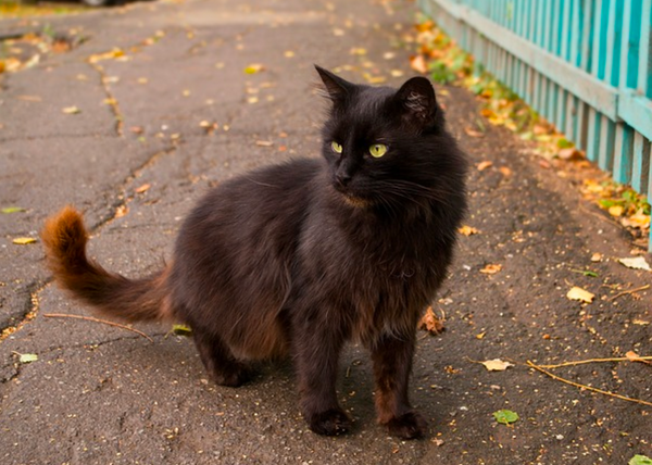 8 Spooky Facts About Black Cats – Meowingtons - photo#29