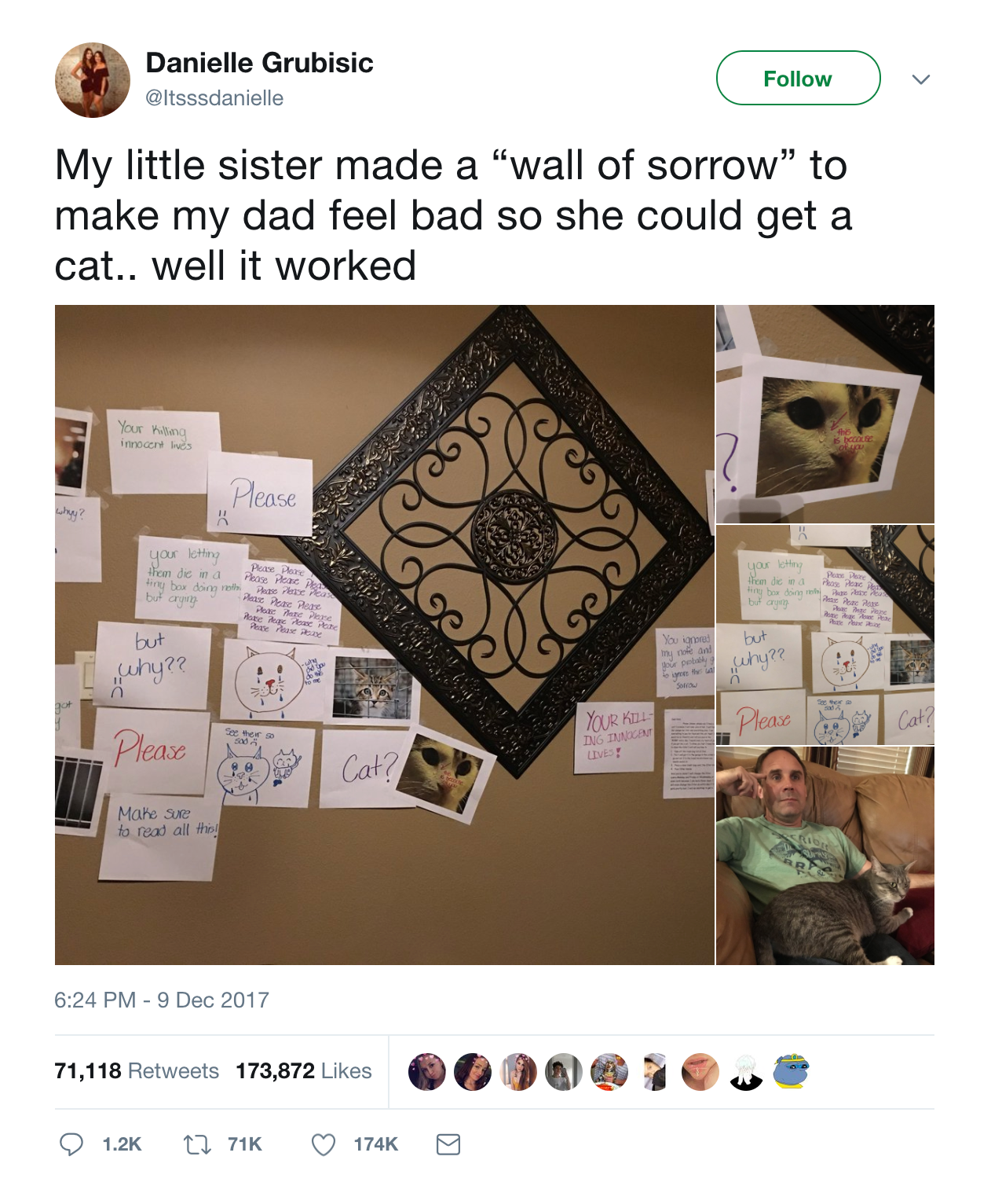 wall of sorrow guilt trip cat