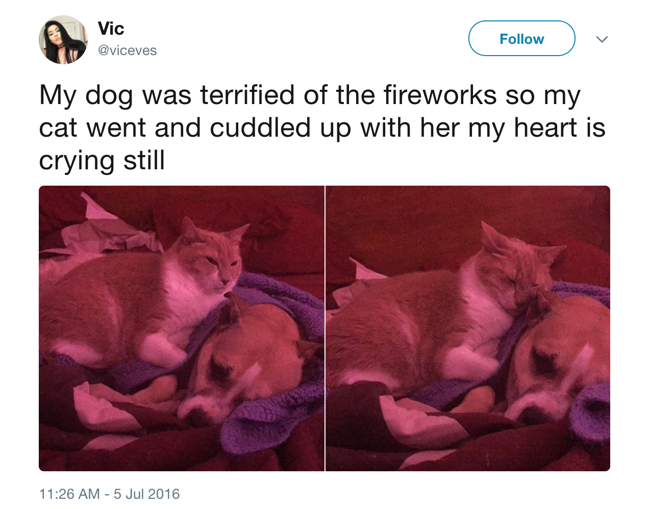 fourth of july cat and dog