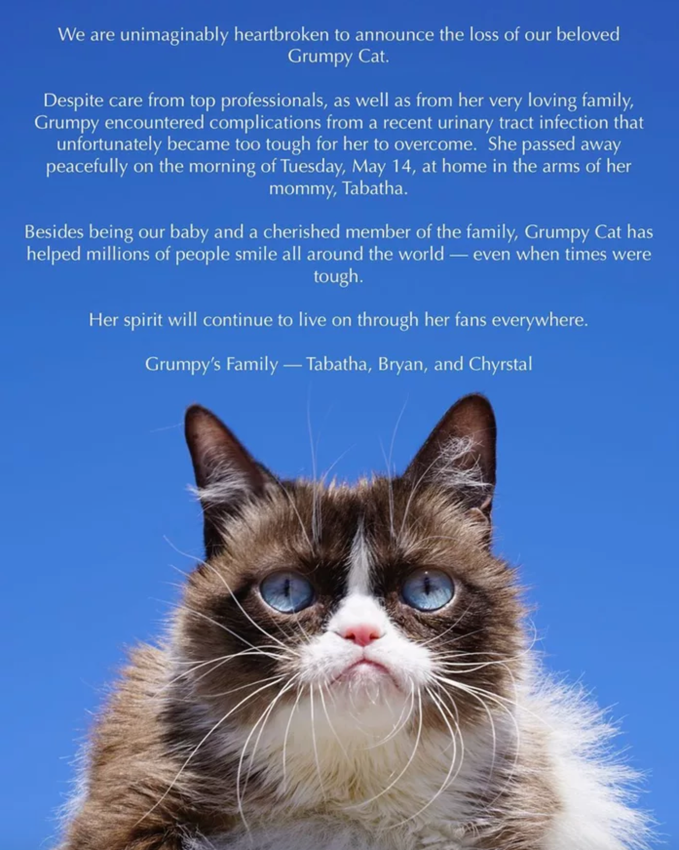 29574eb68f Grumpy Cat's perma-frown and tiny size (weighing less than five pounds) are  due to a condition called dwarfism.