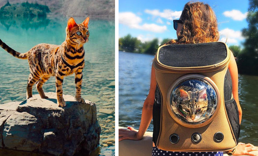 This Adorable Cat Backpack Will Change Your Life And Your
