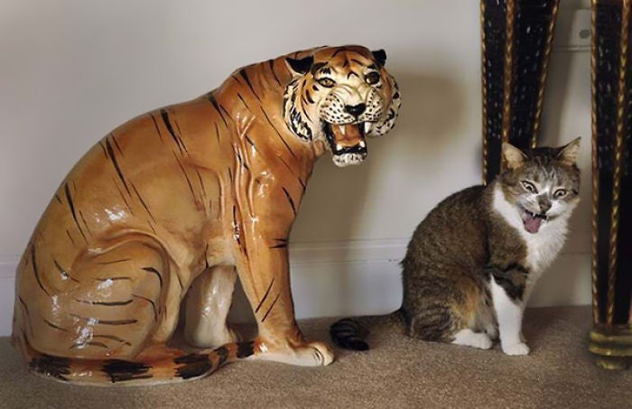 cat and tiger tiger cat