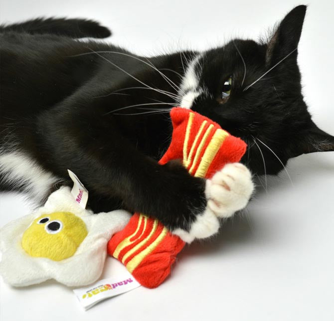 Self Play Cat Toys Laser