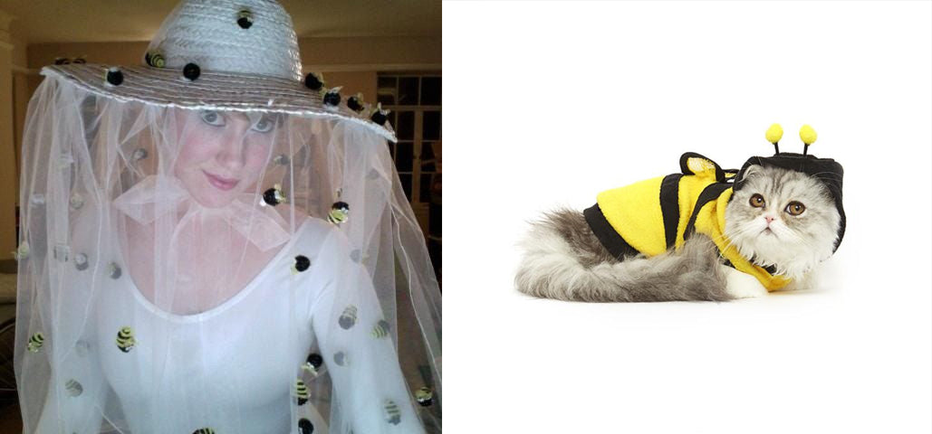 cat bee costume