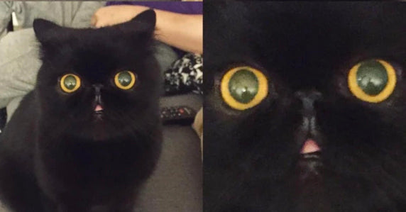 13 Adorable Black Cats To Bring You Good Luck This Friday 13th Meowingtons