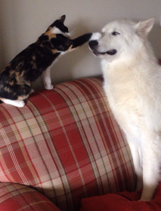 cats and dogs love boop boop the snoot