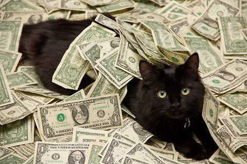Cats on black friday