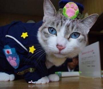 officer lemon cat police police cat famous cats famous internet cats meowingtons