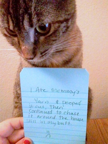 Meowingtons cat note funny