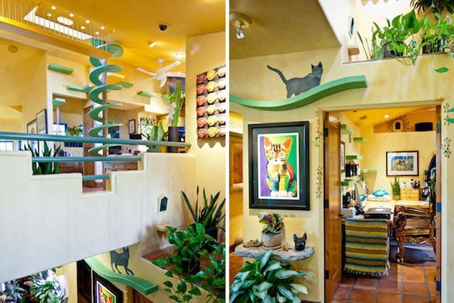Man Turns His House Into An Indoor Cat Playland For His 15 Rescue Cats Meowingtons